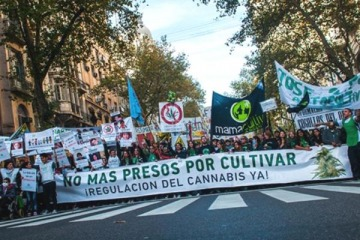 El uso medicinal del Cannabis cerca de convertirse en ley