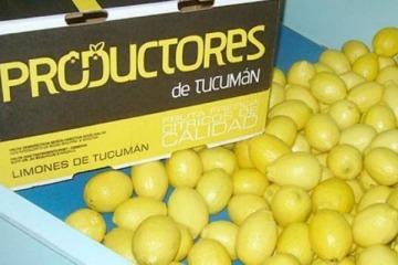 Los limones tucumanos ya tienen fecha de ingreso a Estados Unidos
