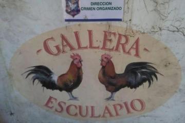 """Insólito: Ritondo festejó su """"pelea"""" contra la inseguridad por rescatar aves del campo de """"Un gallo para Esculapio"""""""