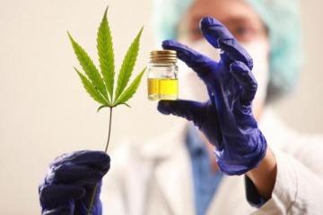 El proyecto de Kicillof para legalizar el autocultivo y la industria del cannabis medicinal en la Provincia