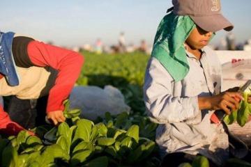 Cómo funcionará el programa del Gobierno que buscará erradicar el trabajo infantil