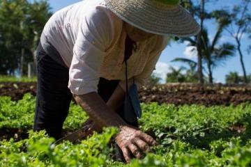 Fomento a la Agroecología: de qué trata la iniciativa que busca proteger los desarrollos e impulsar nuevas producciones