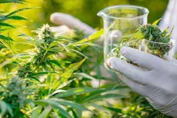El convenio entre Conicet, Ministerio de Salud y la UNAJ por la diplomatura en cannabis y sus usos medicinales