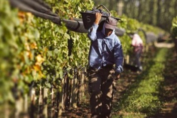 Diputados convierte en ley proyectos para beneficiar a trabajadores viñateros